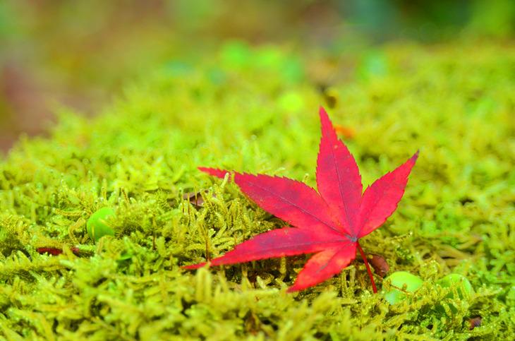 http://www.kanbannikka.com/blog/images/momiji-1.jpg